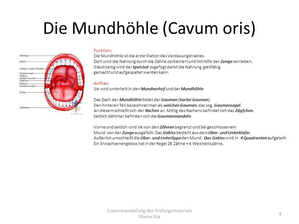 Die Mundhöhle (Cavum oris)