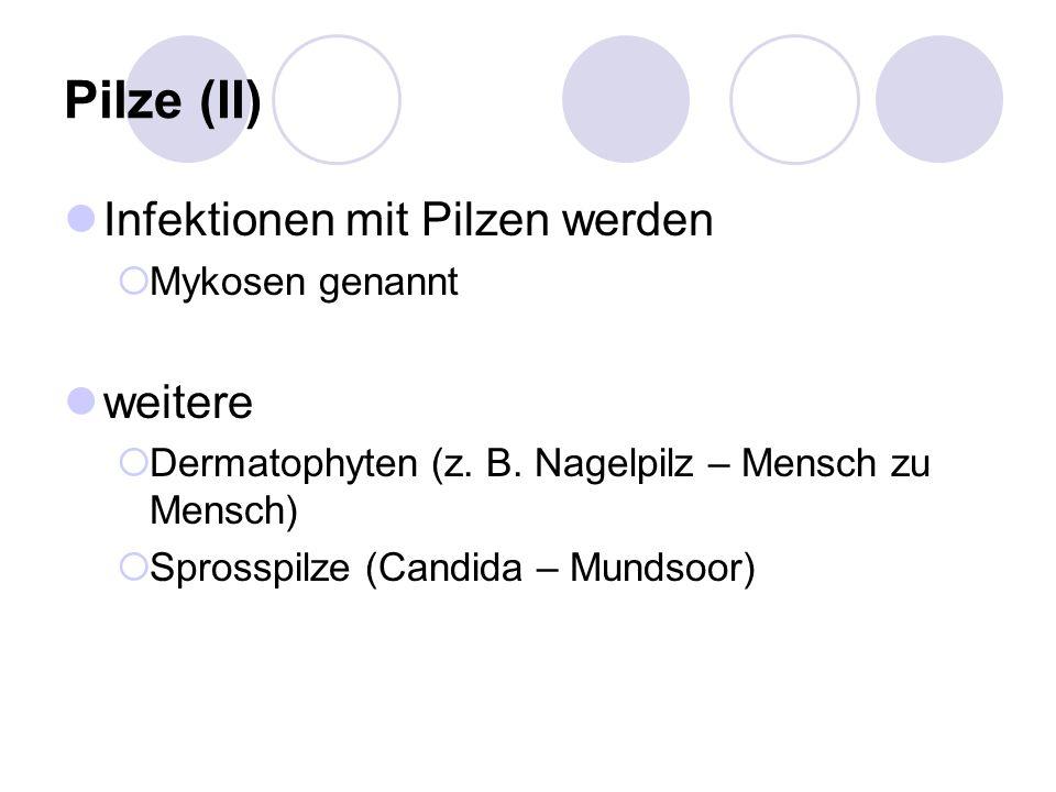 Pilze (II) Infektionen mit Pilzen werden weitere Mykosen genannt
