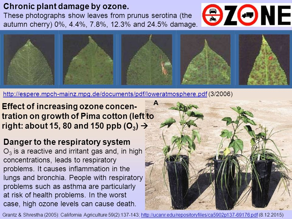 Chronic plant damage by ozone.