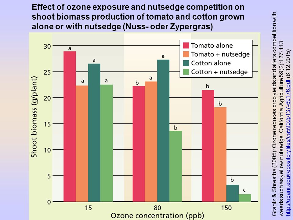 Effect of ozone exposure and nutsedge competition on shoot biomass production of tomato and cotton grown alone or with nutsedge (Nuss- oder Zypergras)