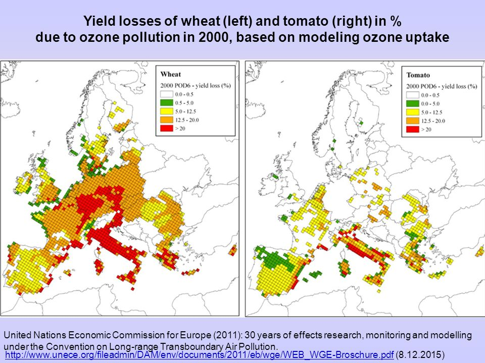 Yield losses of wheat (left) and tomato (right) in % due to ozone pollution in 2000, based on modeling ozone uptake