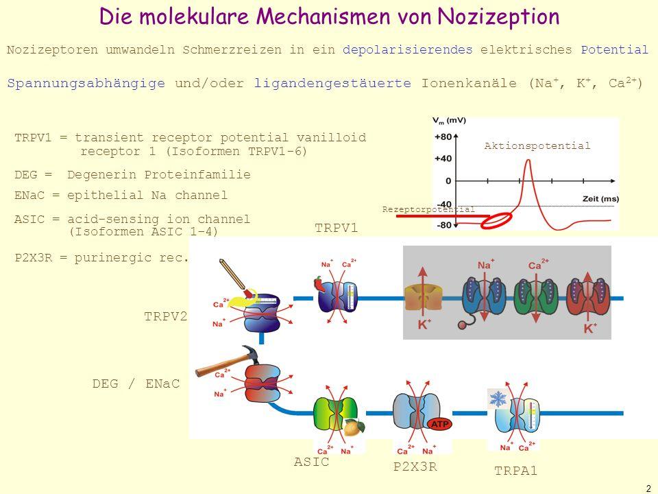 Die molekulare Mechanismen von Nozizeption