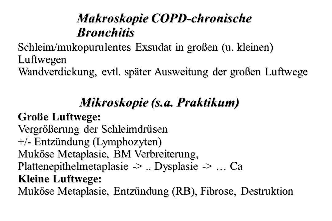 Makroskopie COPD-chronische Bronchitis
