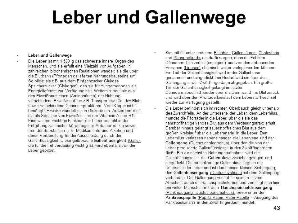 Leber und Gallenwege