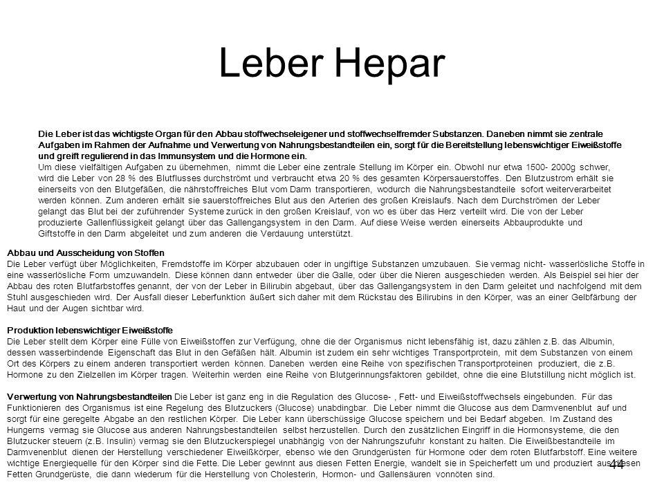 Leber Hepar