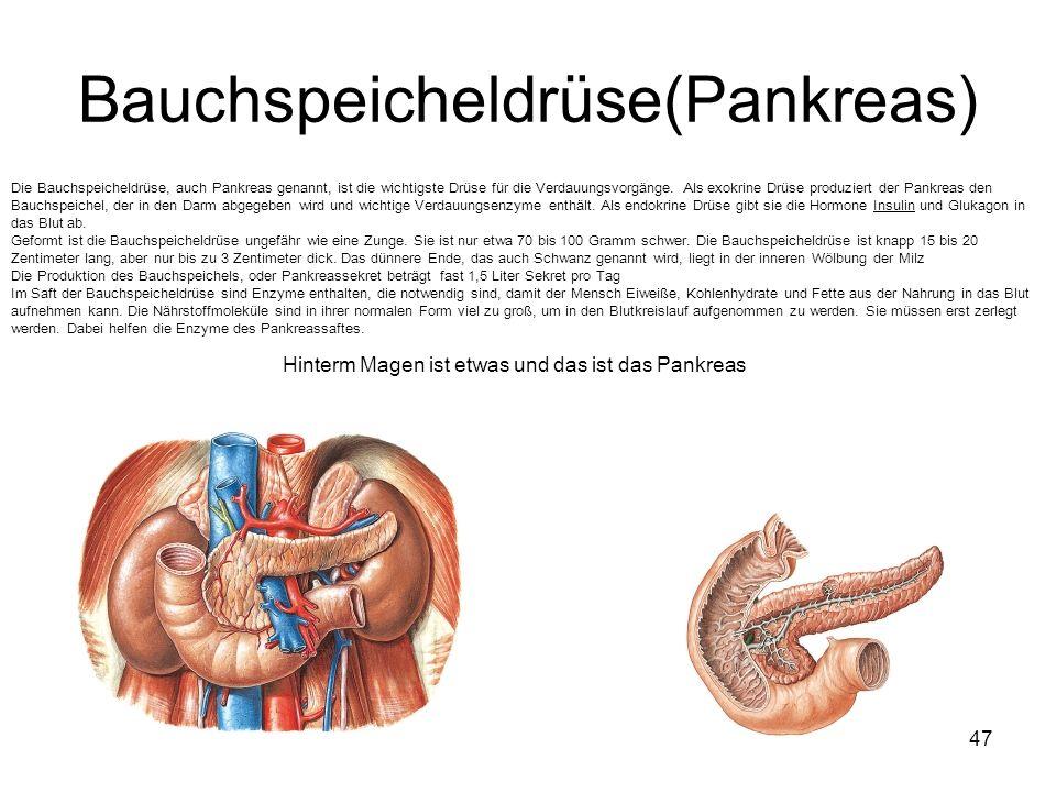 Fantastisch Menschliche Pankreas Lage Ideen - Menschliche Anatomie ...