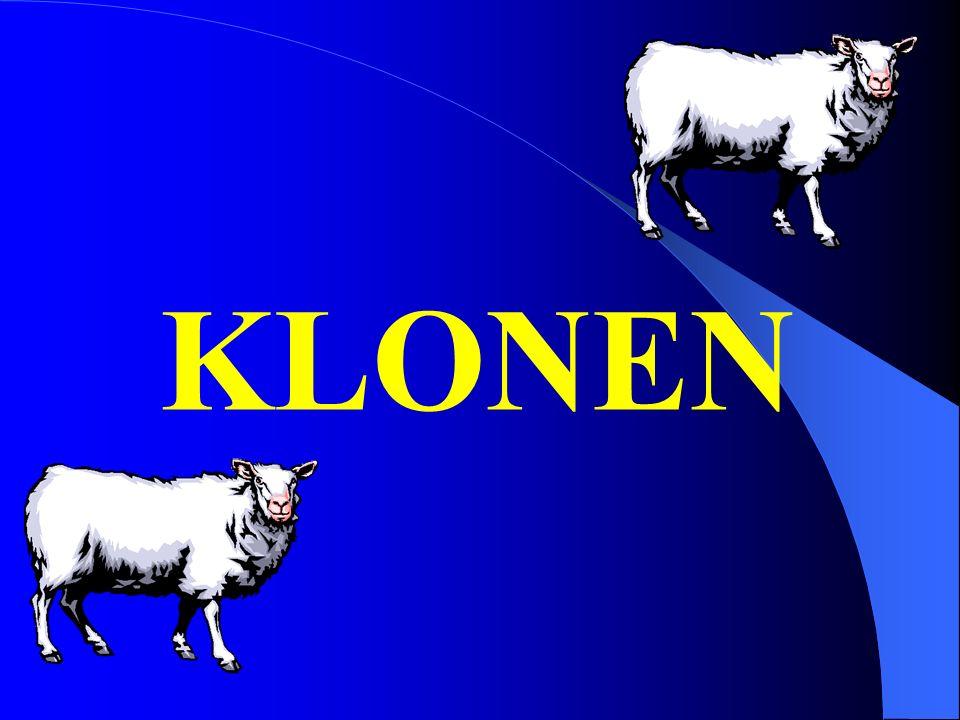 KLONEN