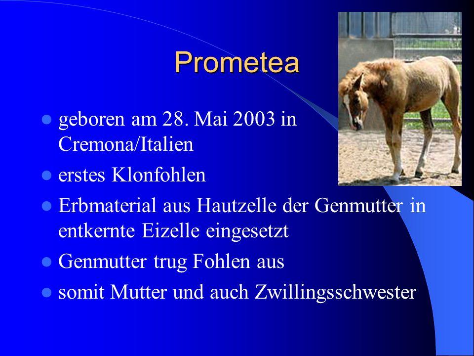 Prometea geboren am 28. Mai 2003 in Cremona/Italien erstes Klonfohlen