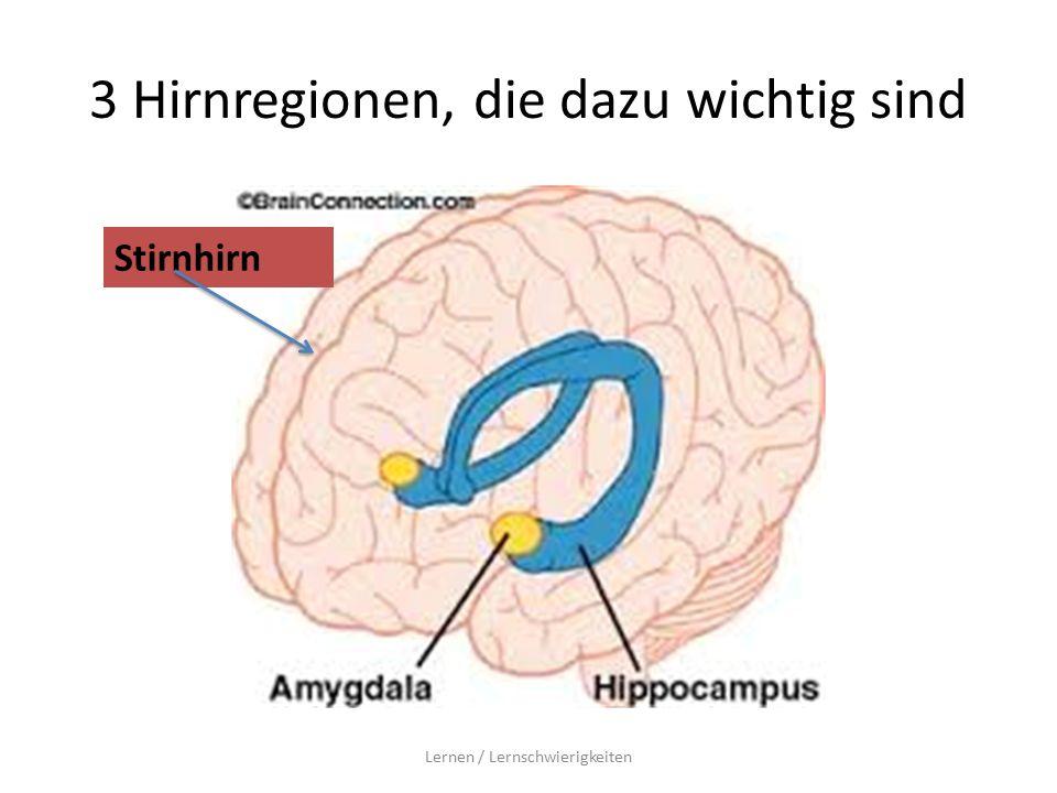 3 Hirnregionen, die dazu wichtig sind