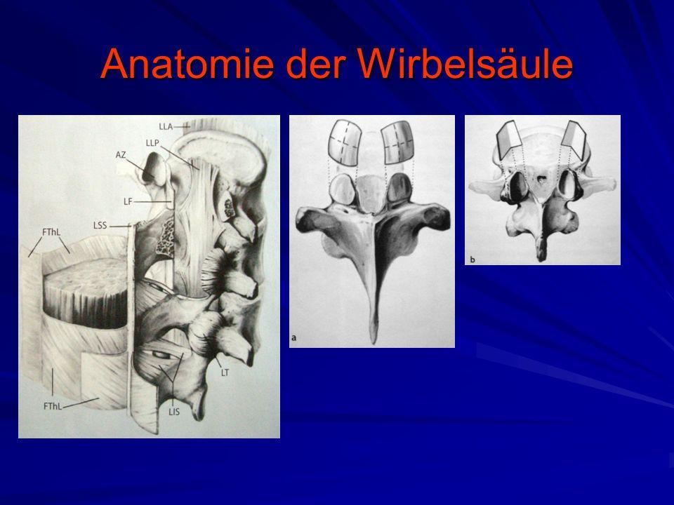 Anatomie der Wirbelsäule