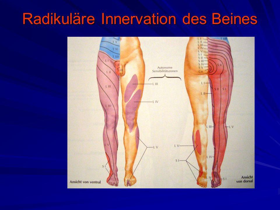 Radikuläre Innervation des Beines