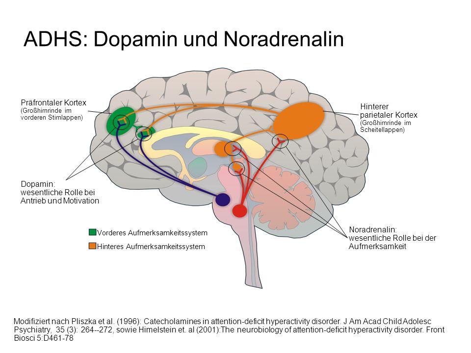 ADHS: Dopamin und Noradrenalin