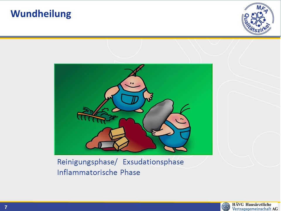 Wundheilung Reinigungsphase/ Exsudationsphase Inflammatorische Phase