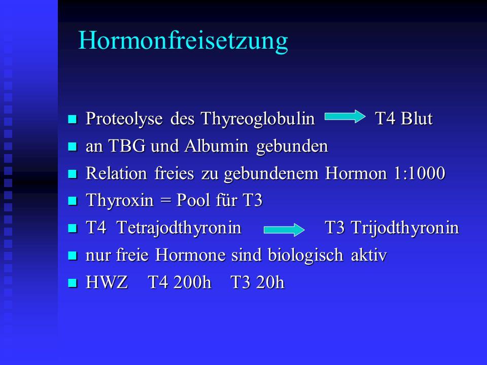 Hormonfreisetzung Proteolyse des Thyreoglobulin T4 Blut
