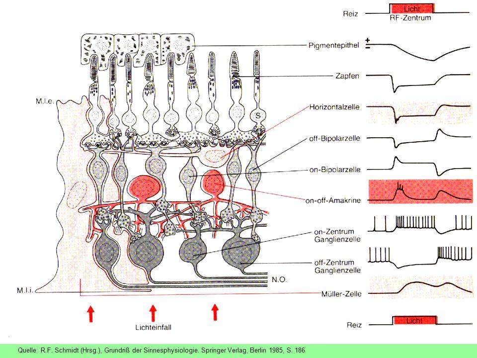 Quelle: R. F. Schmidt (Hrsg. ), Grundriß der Sinnesphysiologie