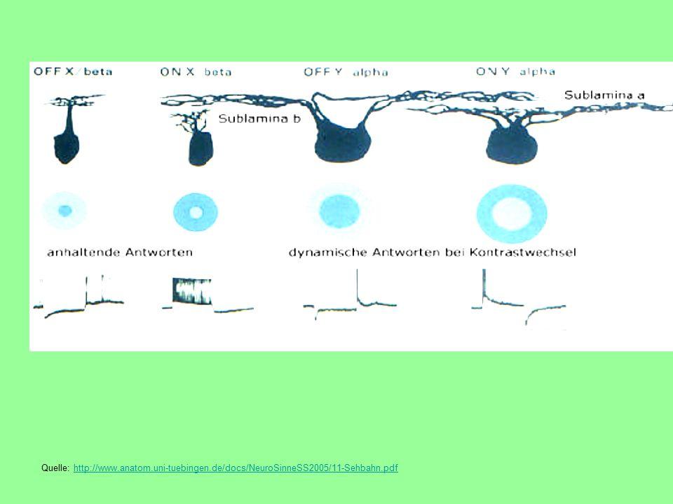 Quelle: http://www. anatom. uni-tuebingen