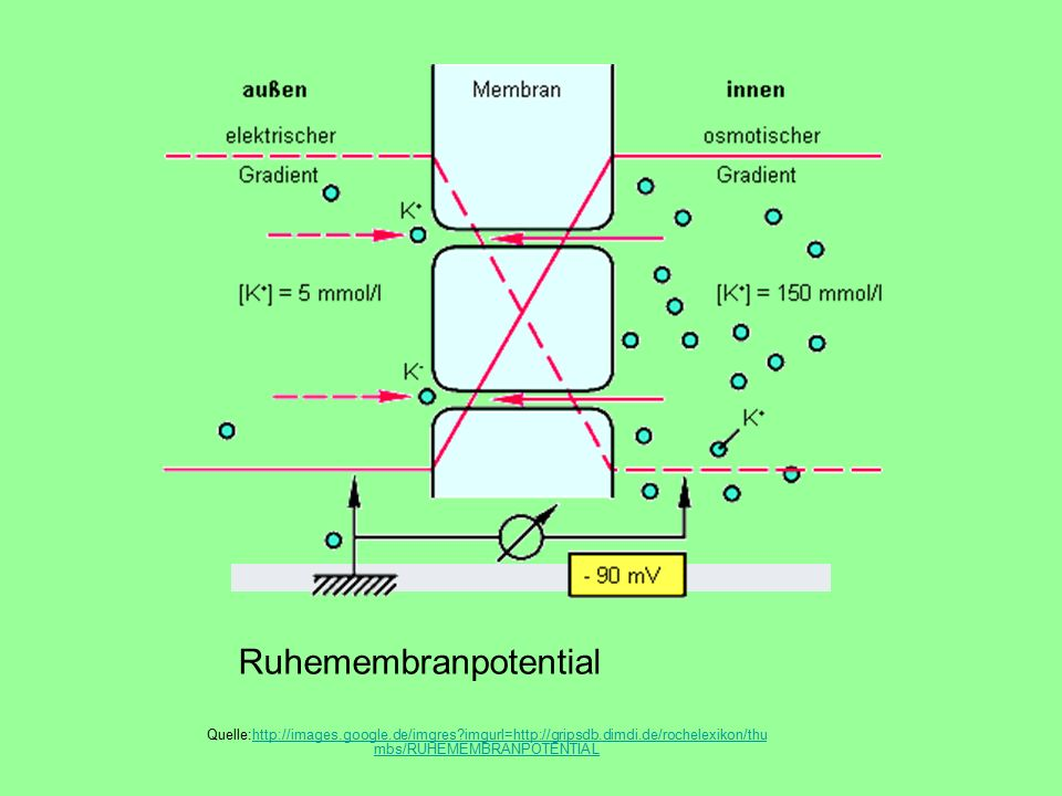 Ruhemembranpotential