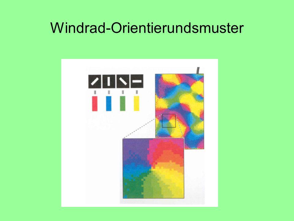 Windrad-Orientierundsmuster