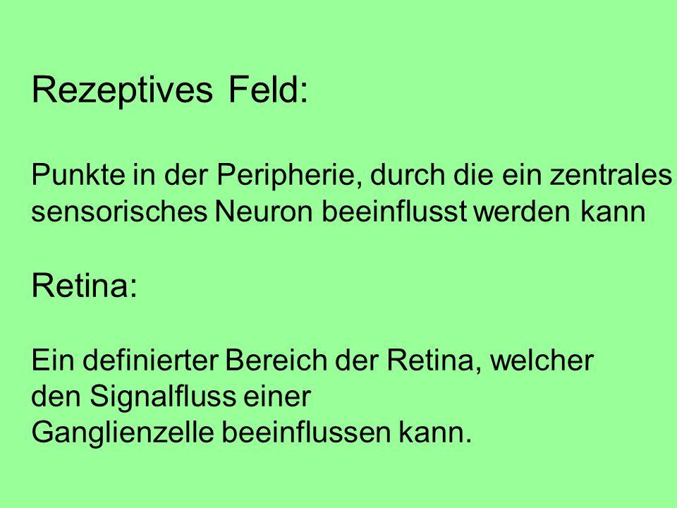 Rezeptives Feld: Retina: