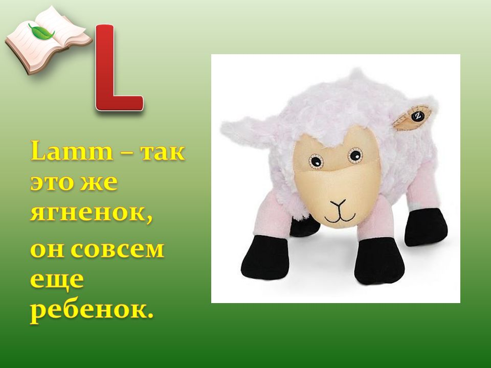 L Lamm – так это же ягненок, он совсем еще ребенок.