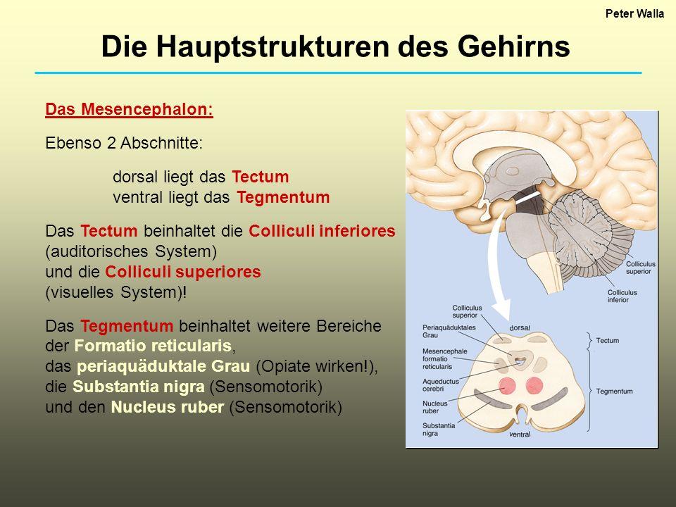 Die Hauptstrukturen des Gehirns