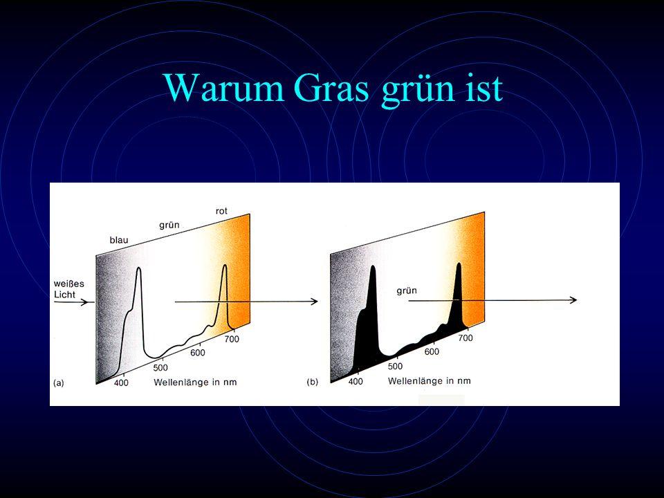 Warum Gras grün ist Für uns sichtbar sind die nicht absorbierten Wellenlängen des Licht-Spektrums.