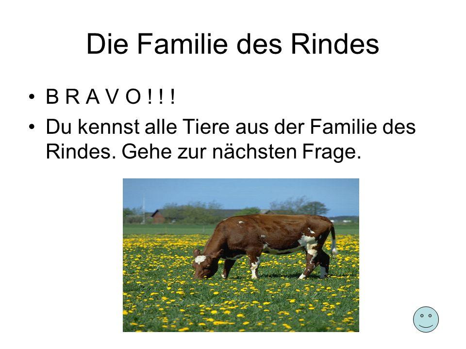 Die Familie des Rindes B R A V O ! ! !