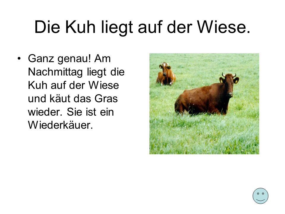Die Kuh liegt auf der Wiese.