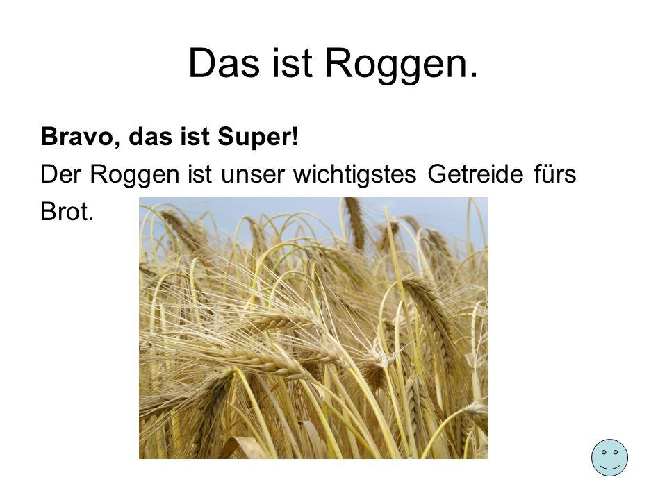 Das ist Roggen. Bravo, das ist Super!