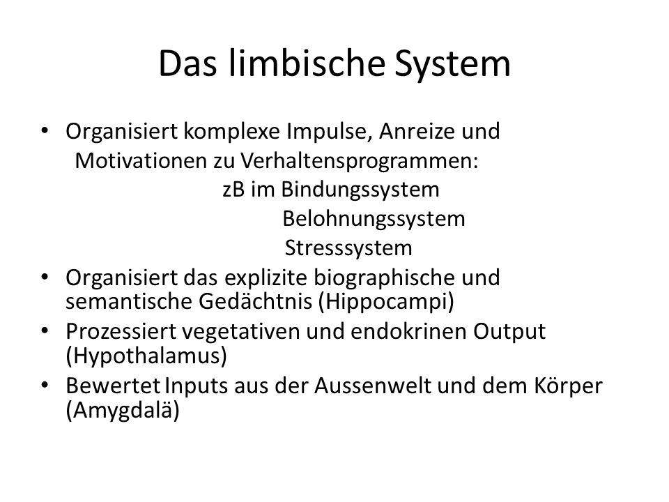 Das limbische System Organisiert komplexe Impulse, Anreize und