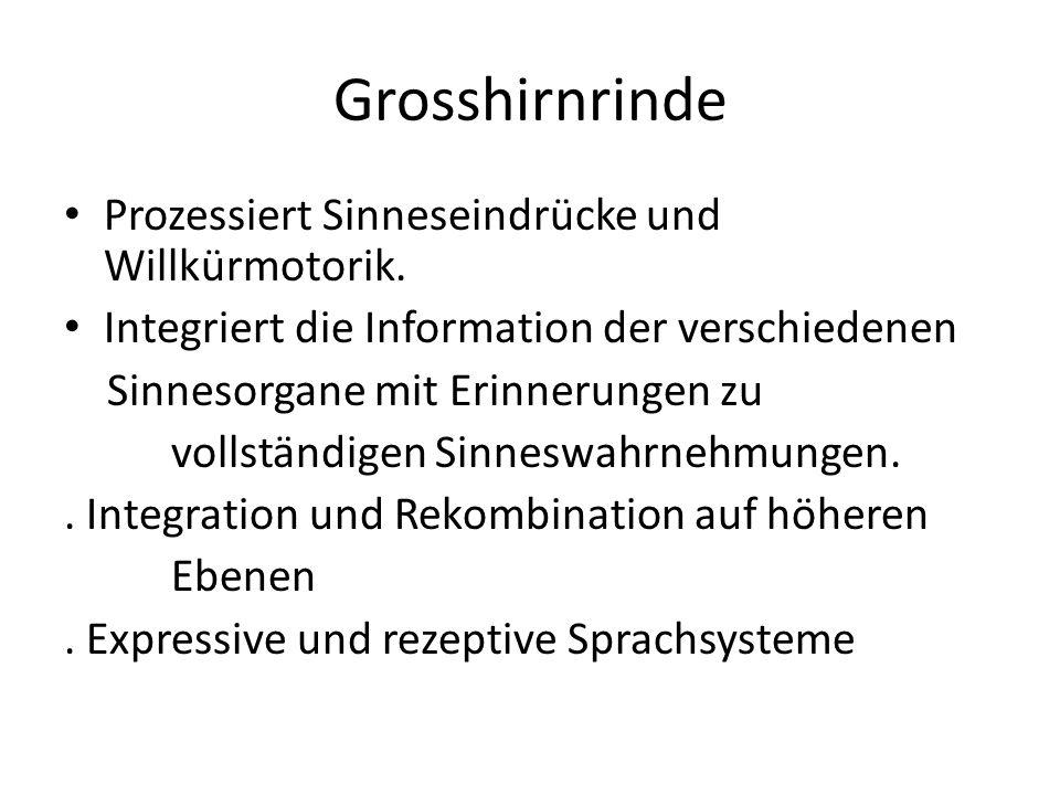 Grosshirnrinde Prozessiert Sinneseindrücke und Willkürmotorik.