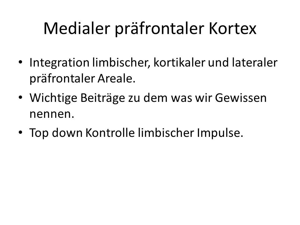 Medialer präfrontaler Kortex
