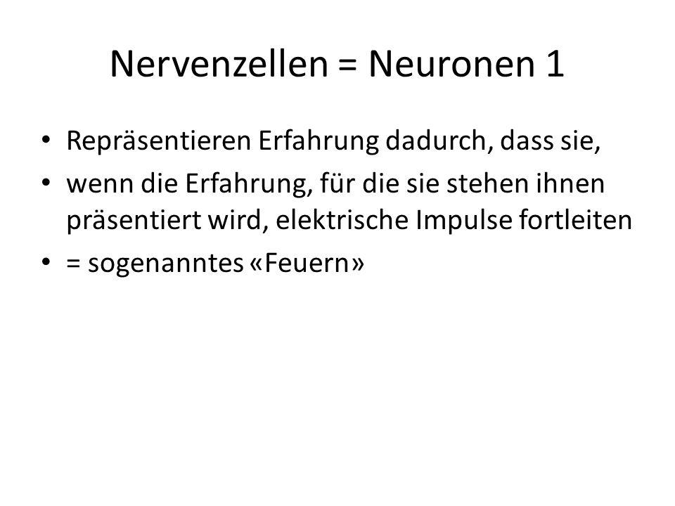 Nervenzellen = Neuronen 1