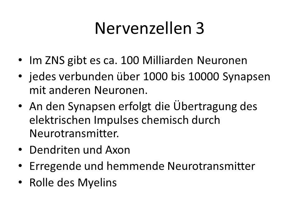 Nervenzellen 3 Im ZNS gibt es ca. 100 Milliarden Neuronen