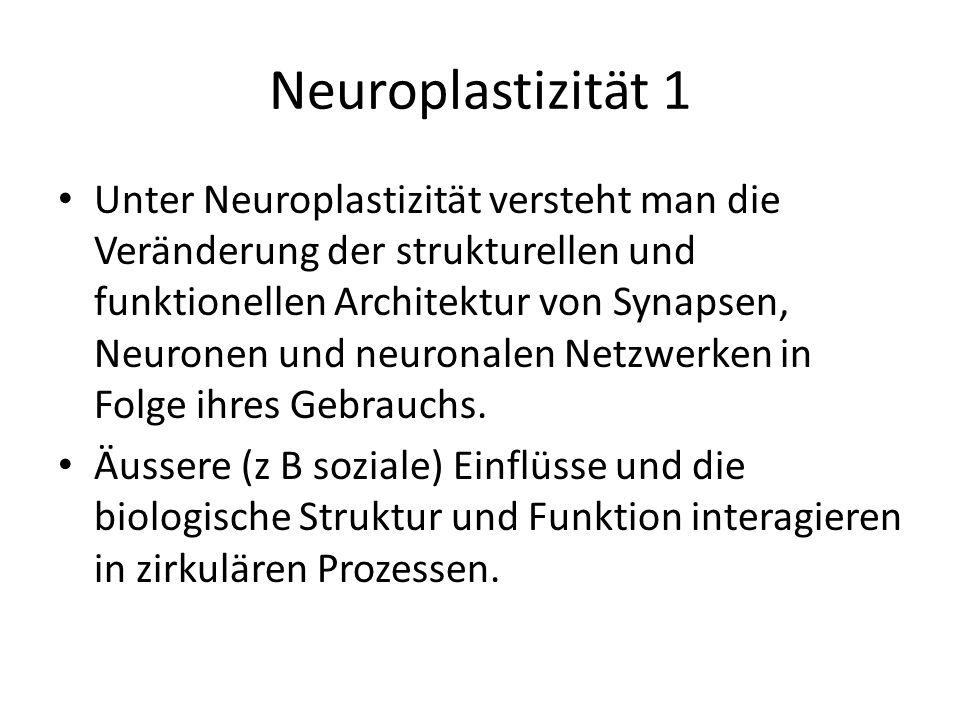 Neuroplastizität 1