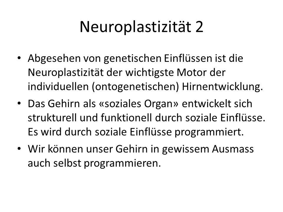 Neuroplastizität 2
