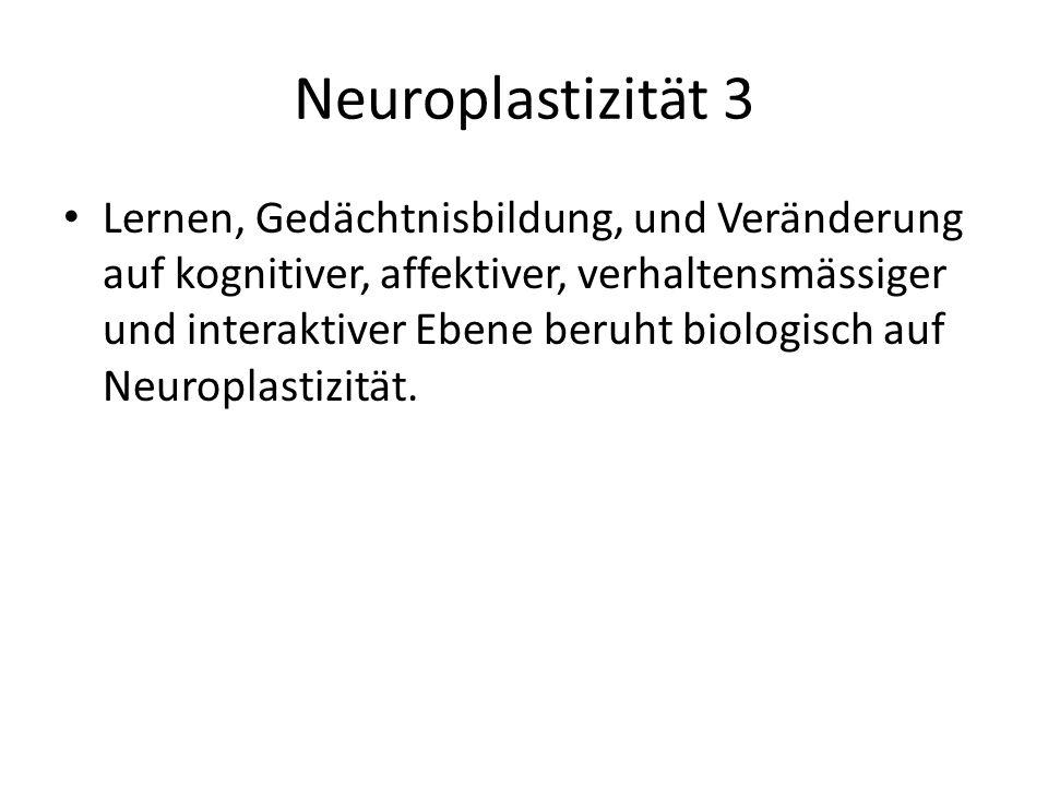 Neuroplastizität 3