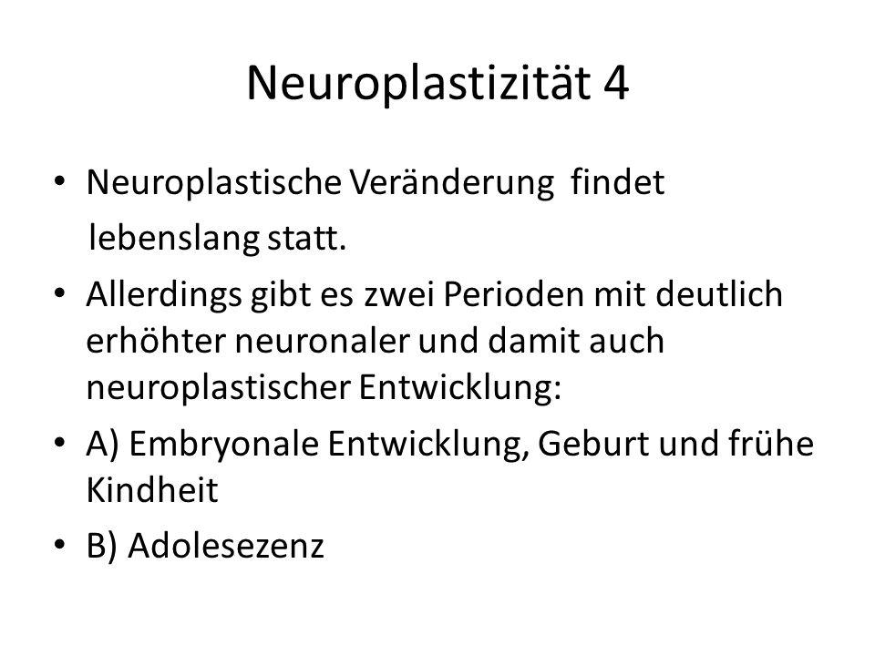Neuroplastizität 4 Neuroplastische Veränderung findet