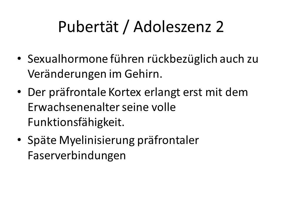 Pubertät / Adoleszenz 2 Sexualhormone führen rückbezüglich auch zu Veränderungen im Gehirn.