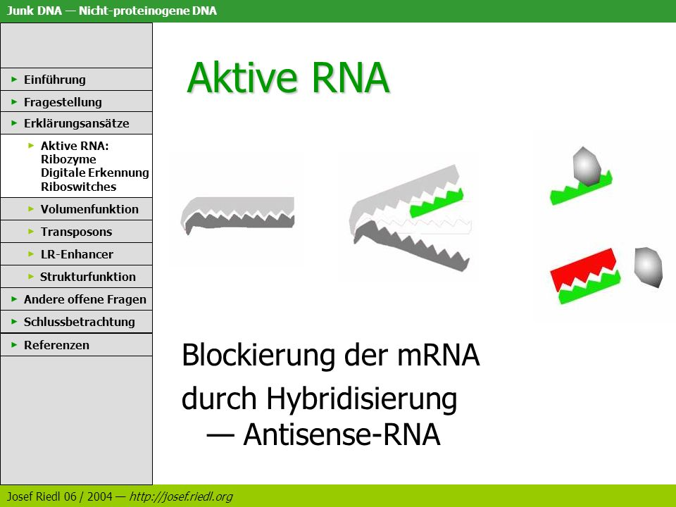 Aktive RNA Blockierung der mRNA durch Hybridisierung — Antisense-RNA
