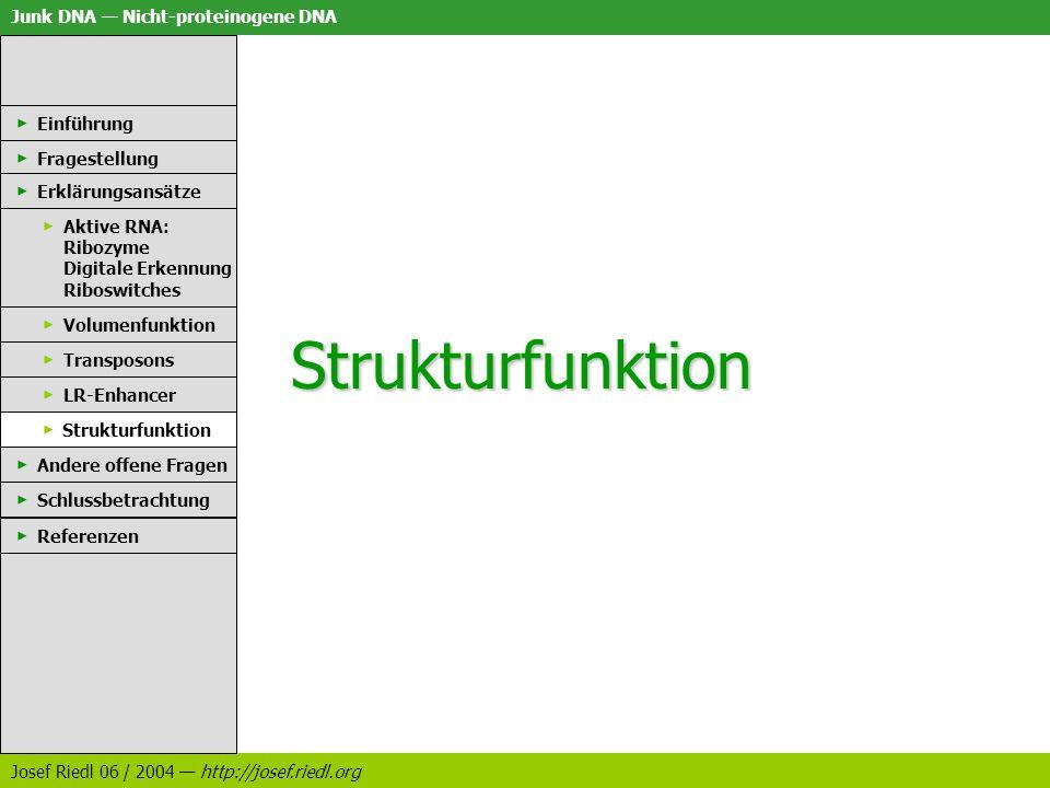 Strukturfunktion Einführung Fragestellung Erklärungsansätze