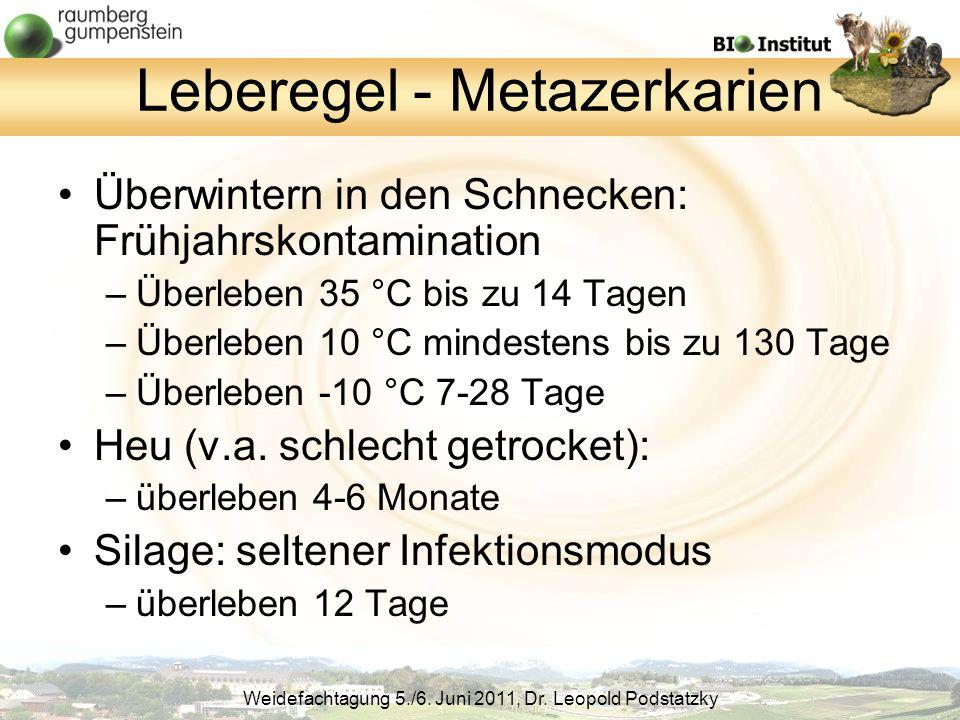 Leberegel - Metazerkarien