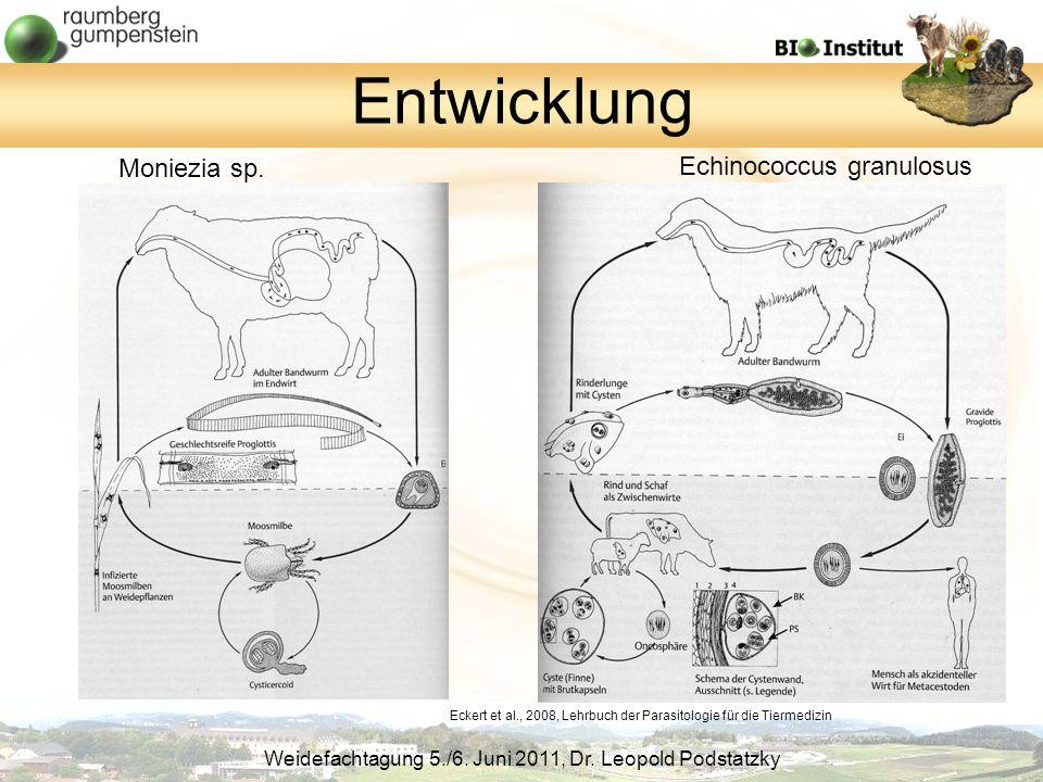 Entwicklung Moniezia sp. Echinococcus granulosus