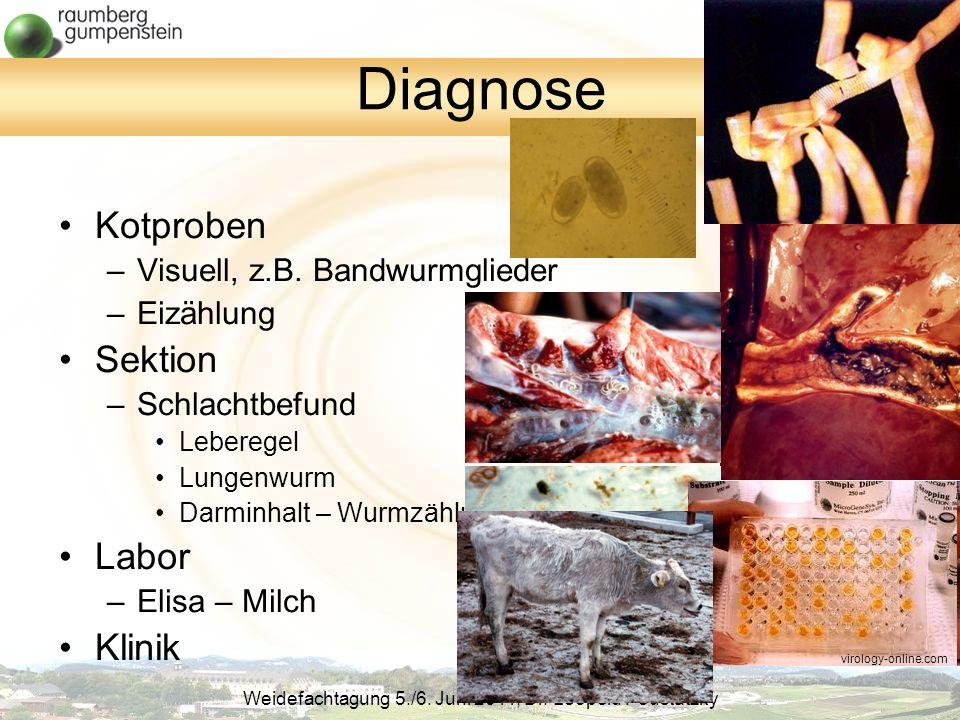 Diagnose Kotproben Sektion Labor Klinik Visuell, z.B. Bandwurmglieder