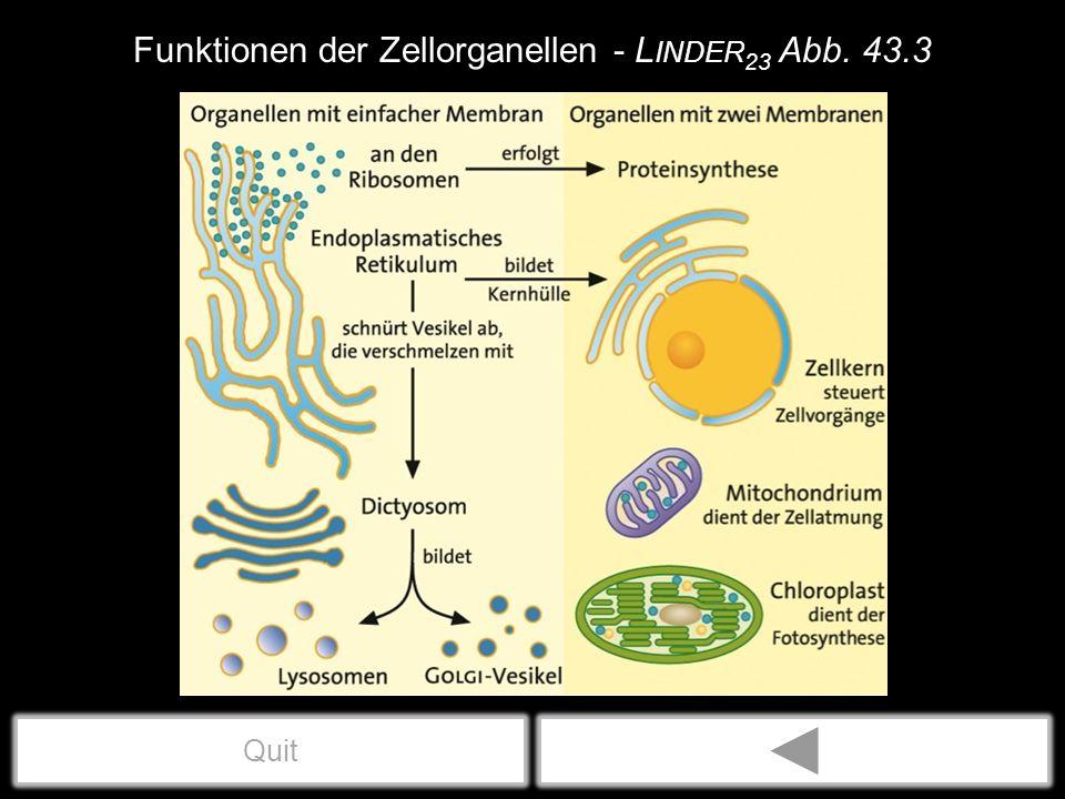 Endocytose & Exocytose - Linder23 Abb. 51.1