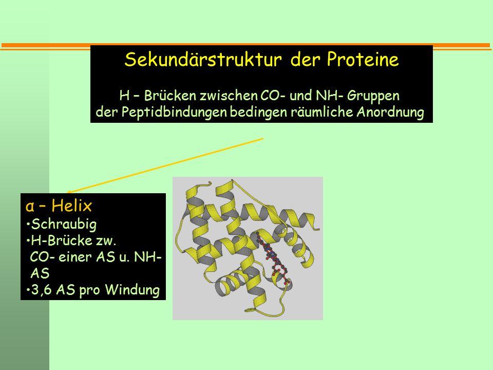 Sekundärstruktur der Proteine