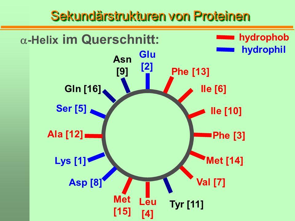 Sekundärstrukturen von Proteinen