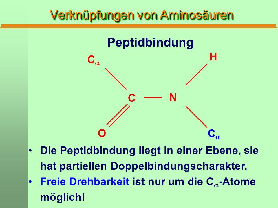 Verknüpfungen von Aminosäuren