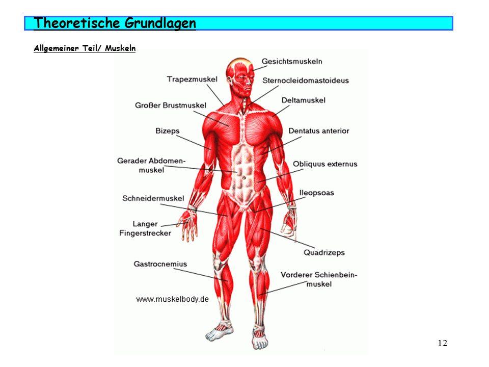Niedlich Mimische Muskulatur Diagramm Ideen - Menschliche Anatomie ...