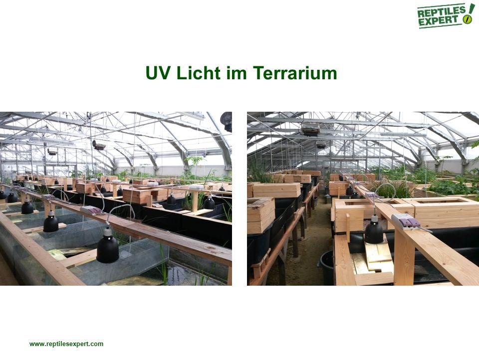 UV Licht im Terrarium